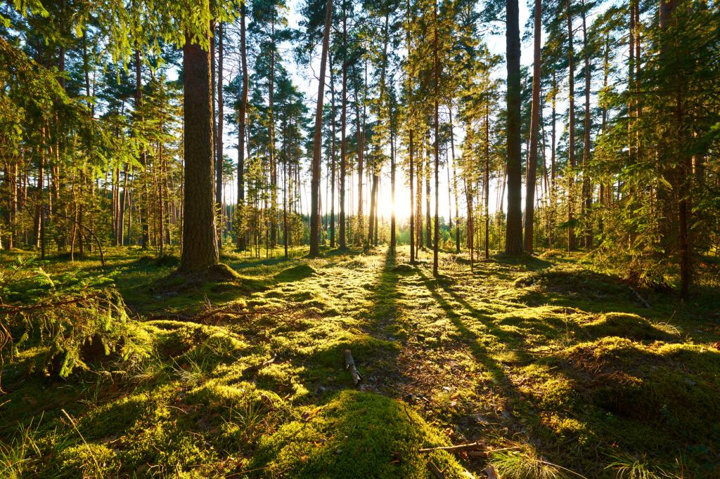 fotolia-92027264european-day-forest-green-forest